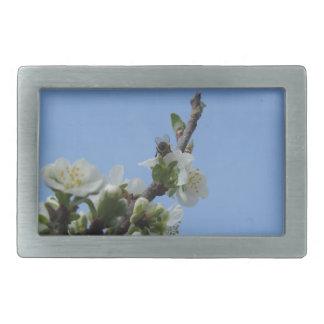 Biene impollinates Blumen des Pflaumenbaums Rechteckige Gürtelschnallen