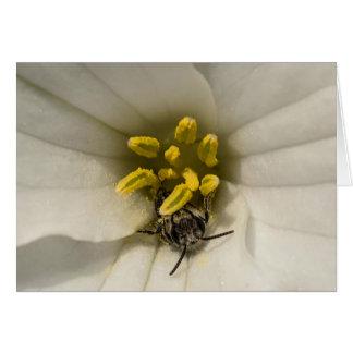 Biene innerhalb einer Trillium-Wildblume Notecard Karte