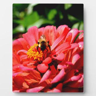Biene und Koralle Zinnia Fotoplatte