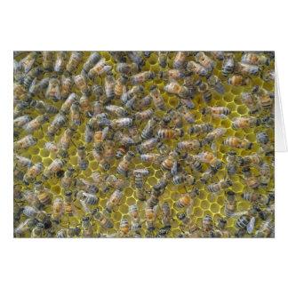 Bienen auf Bienenwabe Karte