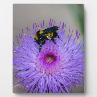 Bienen-bestäubenWildblumen Fotoplatte