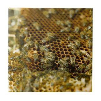 Bienen im Bienenstock, Westkap, Südafrika Keramikfliese