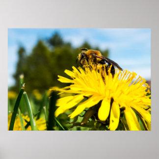 Bienen-Nahaufnahme Poster