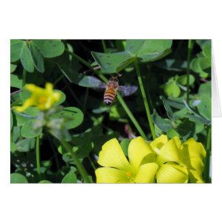 Bienen-und Nicken-Holz Sauerampfer-Blüte Karte