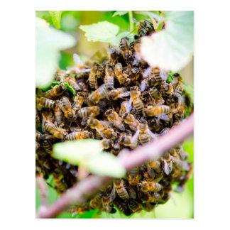 Bienenstock Postkarte