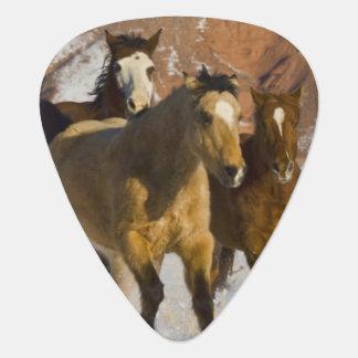 Big Horn-Berge, Pferde, die in den Schnee 3 laufen Plektrum