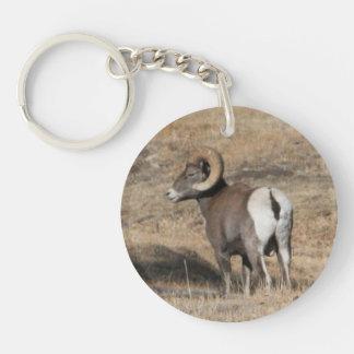 Big Horn-RAM rundes Acrylsauerkeychain Schlüsselanhänger