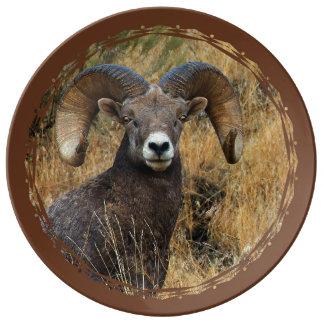 Bighorn-RAM Teller