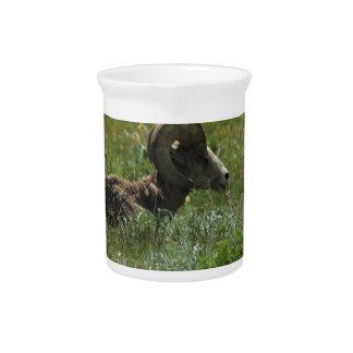 Bighorn-Schafe Krug