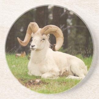 Bighorn-Schafe Sandstein Untersetzer