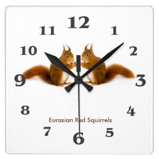 Bild des roten Eichhörnchens für AcrylWanduhr Quadratische Wanduhr