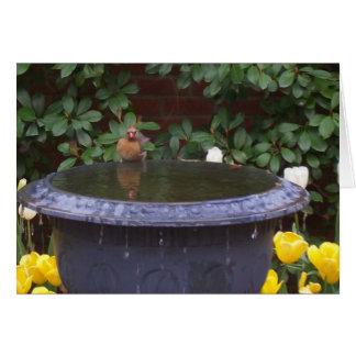 Birdbath Grußkarte