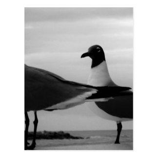 Birds of a Feather Postkarte