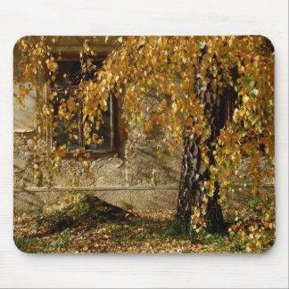 Birke im Herbst Mousepad