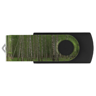 Birken-Wald USB Stick