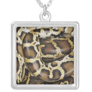 Birmanische Pythonschlange Versilberte Kette