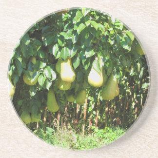 Birnen auf Baumasten Getränkeuntersetzer