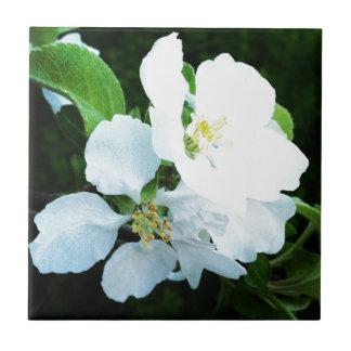 Birnenbaum-Blume Kleine Quadratische Fliese