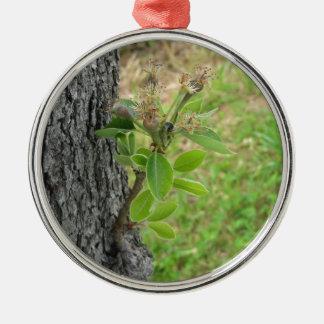 Birnenbaumzweig mit den Knospen im Frühjahr Silbernes Ornament