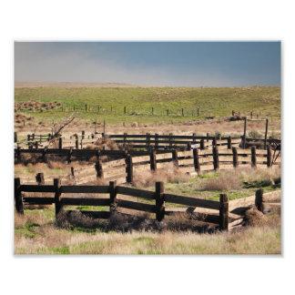 'bis die Kühe kommen Zuhause Fotodruck