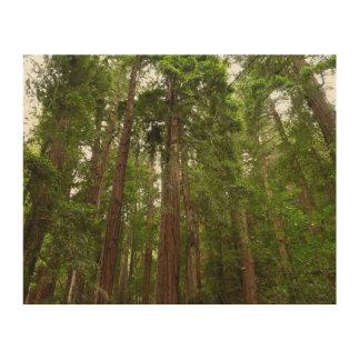Bis zu den Rothölzern am Muir Holz-nationalen Holzwanddeko
