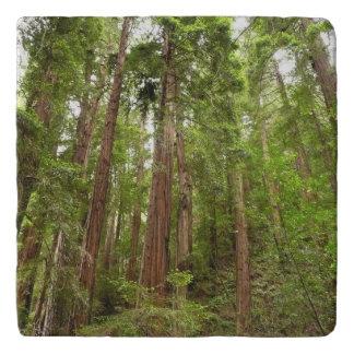 Bis zu den Rothölzern am Muir Holz-nationalen Töpfeuntersetzer