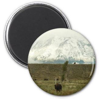 Bison an der großartigen Teton Runder Magnet 5,7 Cm