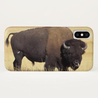 Bison, Bisonbison, Stier in iPhone X Hülle