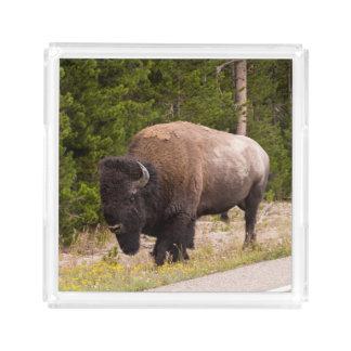 Bison-Büffel-Foto-Serviertablett Acryl Tablett