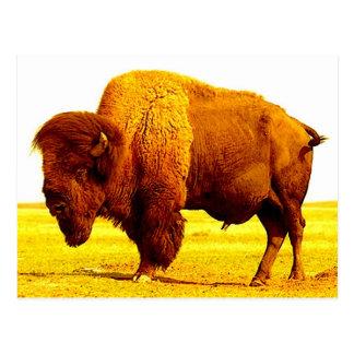 Bison/Büffel Postkarte