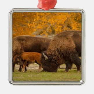 Bison-Familien-Nation Silbernes Ornament