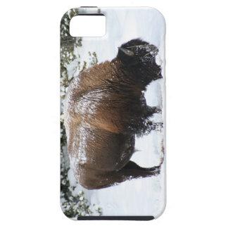 Bison im Griff von Yellowstone-Winter iPhone 5 Case