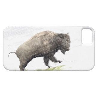 Bison im Wintersturm iPhone 5 Schutzhüllen