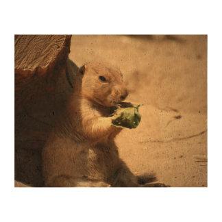 black-tailed-prairie-dog-26.jpg korkdruck