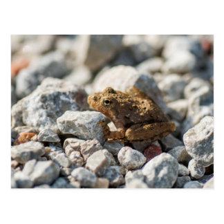 Blanchards Kricket-Frosch Postkarte