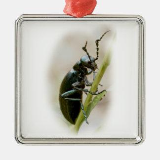 Blasen-Käfer - Meloidae Quadratisches Silberfarbenes Ornament