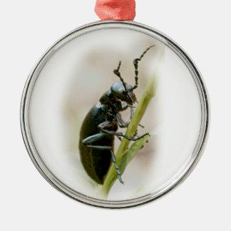 Blasen-Käfer - Meloidae Silbernes Ornament