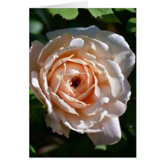 Blasse Pfirsich-Englisch-Rose Karte