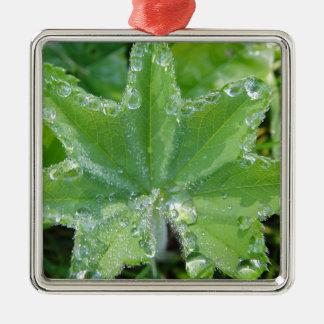 Blatt mit vielen Wassertropfen am Rand Quadratisches Silberfarbenes Ornament