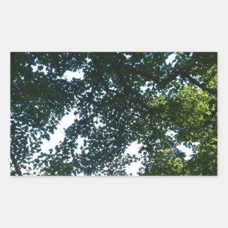 Blätter im Sonnenschein Rechteckiger Aufkleber