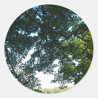 Blätter im Sonnenschein Runder Aufkleber