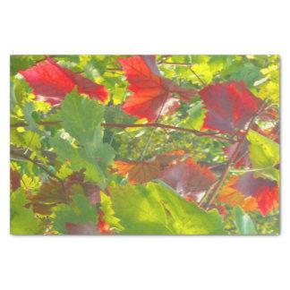 Blätter Seidenpapier