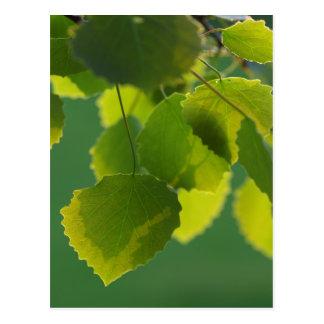 Blätter Wellness Postkarte