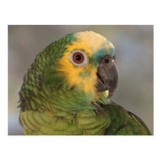 Blau-konfrontierter Amazonas-Papagei Postkarte