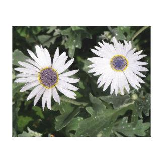 Blau-mit Augen Gänseblümchen-Blumen Leinwanddruck