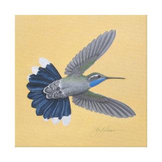 Blau-throated Kolibri-Leinwand-Druck Leinwanddruck