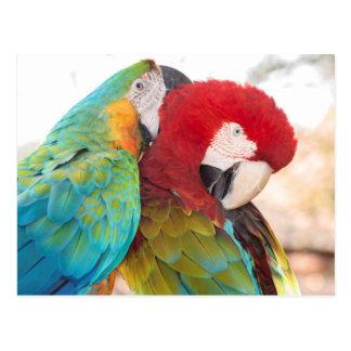 Blau-und-Gelber Macaw und Scarlett Macaw Postkarte