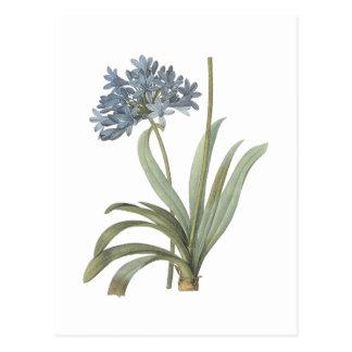 blaue afrikanische Lilie (Agapanthus) durch Postkarte
