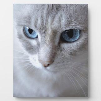 Blaue Augen Kisa Katze Fotoplatte