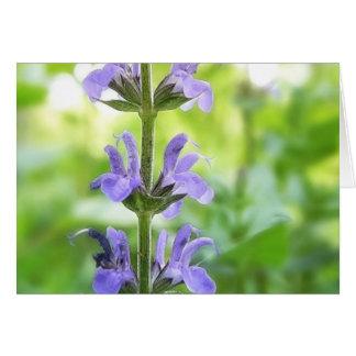 Blaue Blumen der Königin-Salvia Karte